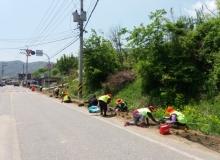 [봉화]재산면 도로변 및 소공원 꽃길조성