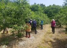 [봉화]상운면 봉화농협, 과수농가 일손돕기 지원